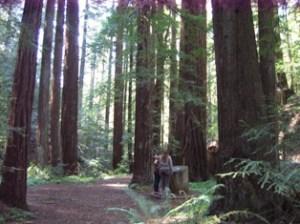CA Redwoods